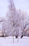 Escena con los árboles helados en parque de la ciudad Imagenes de archivo