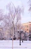 Escena con los árboles helados en parque de la ciudad Foto de archivo
