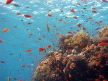 Escena coralina Fotografía de archivo libre de regalías