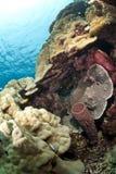 Escena coralina tropical colorida en agua baja. Imágenes de archivo libres de regalías