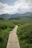 Escena de Backcountry de la montaña del verano de Colorado Imagenes de archivo