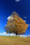 Escena de la caída Imagen de archivo libre de regalías