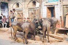 Escena de la calle del bazar de Kinari, Agra Fotografía de archivo libre de regalías