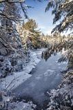 Escena de la charca del invierno Fotos de archivo