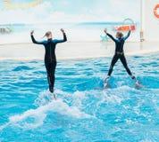 Escena de la demostración del delfín Fotografía de archivo