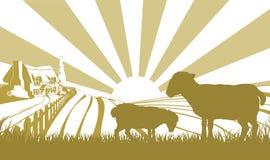 Escena de la granja de las ovejas Foto de archivo