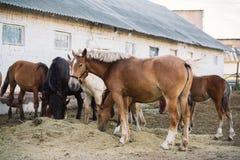 Escena de la granja del caballo Fotos de archivo libres de regalías