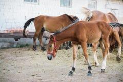 Escena de la granja del caballo Imagen de archivo