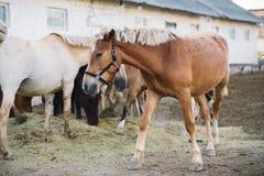 Escena de la granja del caballo Fotografía de archivo