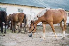 Escena de la granja del caballo Fotos de archivo