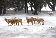 Escena de la granja del invierno Imágenes de archivo libres de regalías