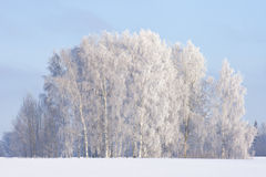 Escena de la helada del invierno Fotos de archivo libres de regalías