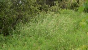 Escena de la hierba de prado salvaje almacen de video