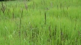 Escena de la hierba de prado salvaje almacen de metraje de vídeo