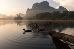 Escena de la mañana de patos en una charca Fotos de archivo