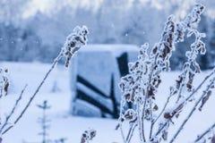 Escena de la mañana del invierno con nieve que cae Foto de archivo
