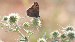Escena de la mañana del verano de la mariposa almacen de video