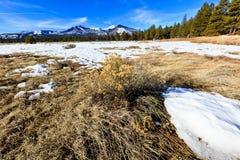 Escena de la montaña de Arizona Imagen de archivo