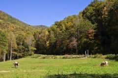 Escena de la montaña del otoño Imagenes de archivo