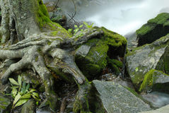 Escena de la naturaleza Imagen de archivo libre de regalías