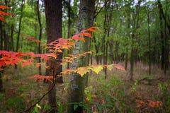 Escena de la naturaleza de la belleza de las caídas Parque otoñal, Autumn Trees, bosque del otoño en naturaleza estacional Fotos de archivo libres de regalías