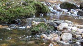 Escena de la naturaleza de la corriente de la montaña