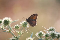 Escena de la naturaleza de la mañana de la mariposa Imágenes de archivo libres de regalías