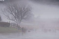 Escena de la niebla Fotografía de archivo libre de regalías