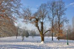 Escena de la nieve Imágenes de archivo libres de regalías
