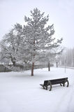 Escena de la nieve Imagen de archivo libre de regalías