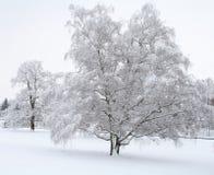 Escena de la nieve Fotos de archivo libres de regalías