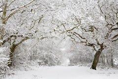 Escena de la nieve del arbolado Imagen de archivo libre de regalías