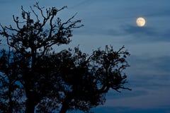 Escena de la noche Imagen de archivo libre de regalías