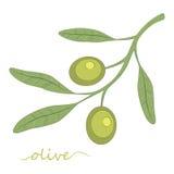 Escena de la noche Aceite de oliva Aceituna verde Vector Imagen de archivo