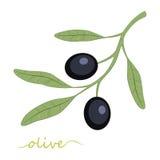 Escena de la noche Aceite de oliva Ilustración Fotos de archivo libres de regalías