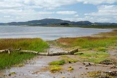 Escena de la playa con madera de deriva Imagen de archivo libre de regalías