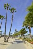 Escena de la playa de California meridional con resaca, Sun y las palmeras Imagen de archivo