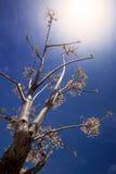 Escena de la primavera - árbol con las cerezas blancas Foto de archivo
