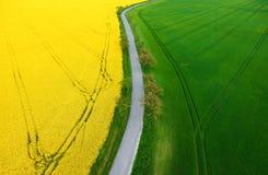 Escena de la primavera con los prados y los campos verdes de la violación Imágenes de archivo libres de regalías