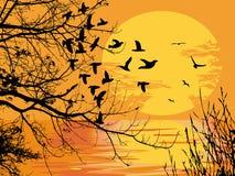 Escena de la puesta del sol Ilustración del Vector