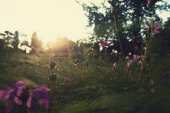 Escena de la puesta del sol Fotos de archivo