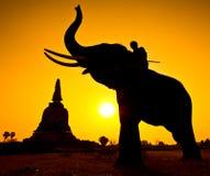 Escena de la puesta del sol del wiith del elefante y de la pagoda Foto de archivo libre de regalías