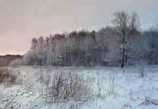 Escena de la tarde del invierno Imágenes de archivo libres de regalías