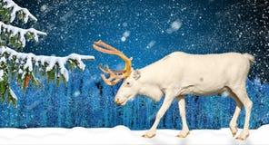 Escena de las vacaciones de invierno en bosque y ciervos que nievan Fotos de archivo libres de regalías