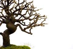Escena de los bonsais Fotos de archivo
