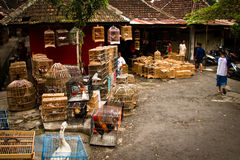 Escena de los mercados del pájaro de Malang, Indonesia foto de archivo libre de regalías
