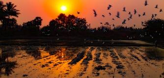 Escena de los pájaros de la puesta del sol Fotos de archivo libres de regalías