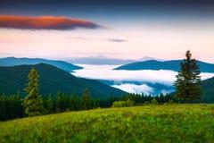 Escena de niebla del verano en las montañas cárpatas Fotografía de archivo
