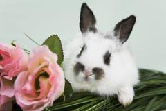 Escena de Pascua fotografía de archivo