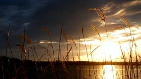 Escena de relajación del lago Beaautiful en la puesta del sol con las cañas de la línea de la playa y sobre todo el cielo nublado almacen de metraje de vídeo